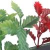 Red/Green Coleus Garnish Black Base 250mm/12 pack